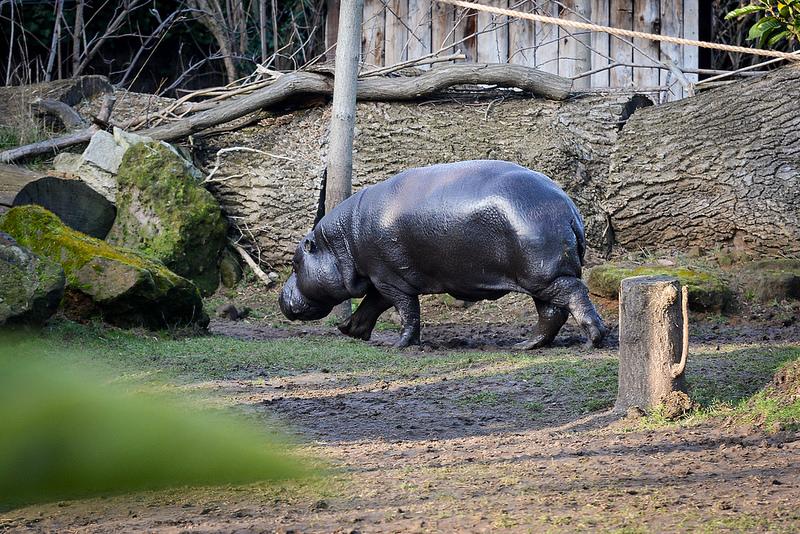 Zobacz nowe maluchy w krakowskim Zoo