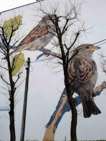 Wielkie kolorowe ptaki - murale na os. Na Kozłówce