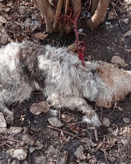 Pies umierał w męczarniach